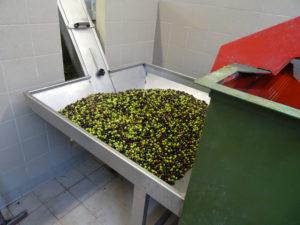 Depart Olives